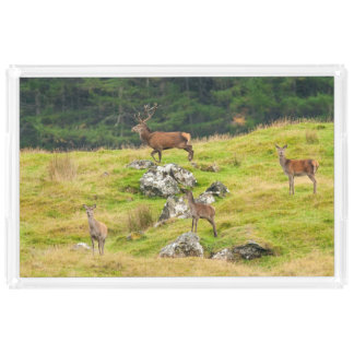 Wild Deer Stag and Hinds Scotland Photograph Acrylic Tray