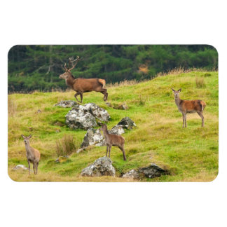 Wild Deer Stag and Hinds Scotland Photograph Magnet