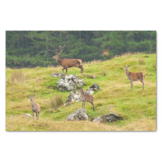 Wild Deer Stag and Hinds Scotland Photograph Tissue Paper