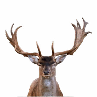 Wild Deer Standing Photo Sculpture