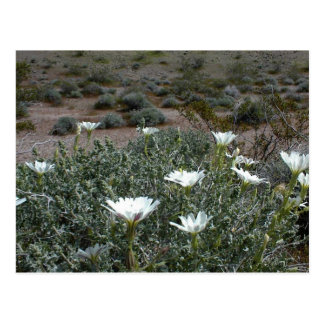 Wild Desert Flowers and Sagebrush Postcard