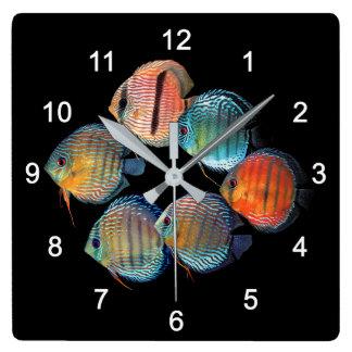 Wild Discus fish Square Wall Clock