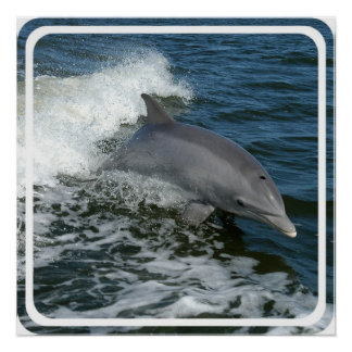 Wild Dolphin Poster Print