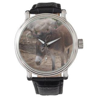 Wild Donkeys Watch