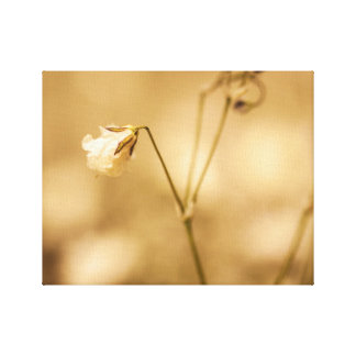 Wild Flower Closeup With Warm Sepia Tone On Canvas Canvas Print