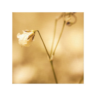Wild Flower Closeup With Warm Sepia Tone On Canvas Gallery Wrapped Canvas