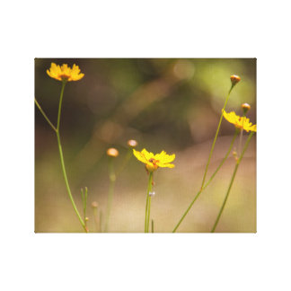 Wild Flower Closeup With Warm Sepia Tone On Canvas Stretched Canvas Print