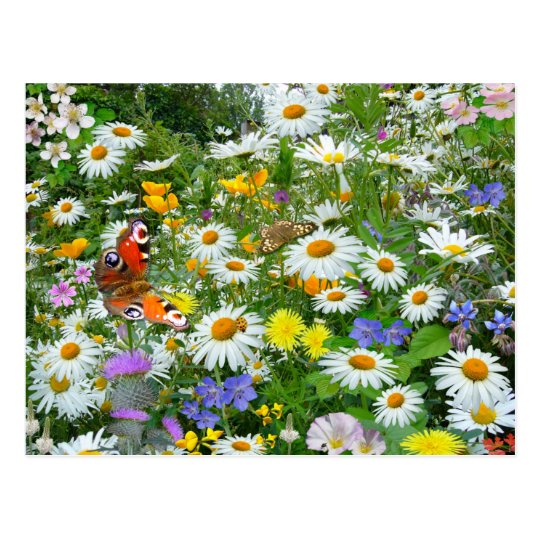 Wild Flower Meadow Postcard
