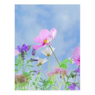 Wild Flowers Blue Sky Postcard