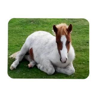 Wild Foals on Bodmin Moor Cornwall England Rectangular Photo Magnet