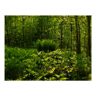 Wild Forest Ferns Poster
