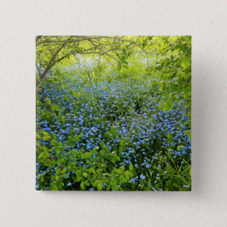 Wild forge me nots flowers photo 2 inch square button
