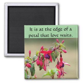 Wild Fuchsias Magnet
