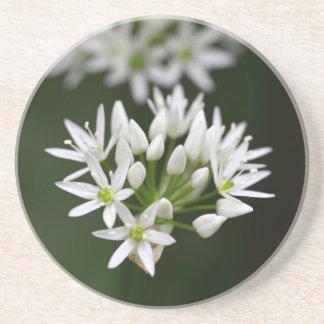 Wild garlic or ramsons Allium ursinum Coaster
