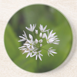 Wild garlic or ramsons Allium ursinum Coasters