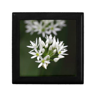 Wild garlic or ramsons Allium ursinum Keepsake Box