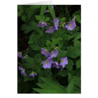 Wild Geraniums Card