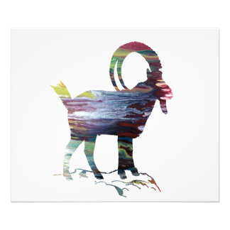 Wild Goat Photo Print