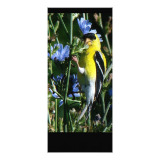 Wild Goldfinch Finch Bird Wildlife Animal Flowers Custom Rack Cards