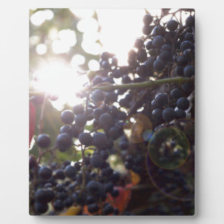 Wild Grapes Plaque
