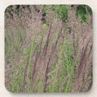 Wild Grasses Of Wisconsin Coaster