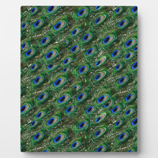 wild green peacock feathers photo plaque