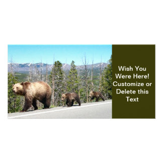 Wild Grizzly Bear Mama and Cubs in Yellowstone Photo Greeting Card