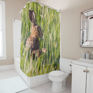 Wild hare having a wash close up