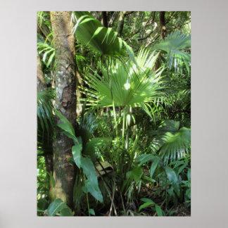 Wild Hawaiian Palm Poster