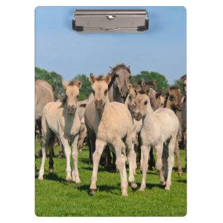 Wild Herd Grullo Color Dulmen Horses Foals Photo - Clipboard