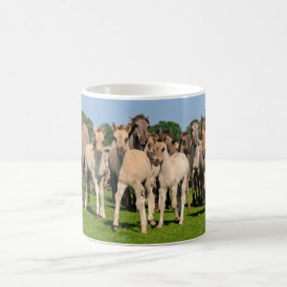 Wild Herd Grullo Color Dulmen Horses Foals Photo - Coffee Mug