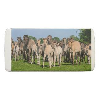 Wild Herd Grullo Colored Dulmen Horses Foals Photo Eraser