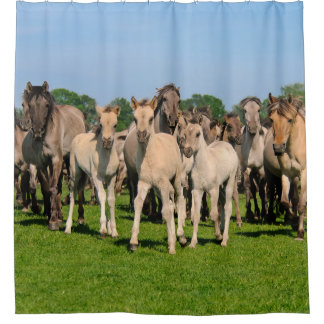 Wild Herd Grullo Colored Dulmen Horses Foals - Tub