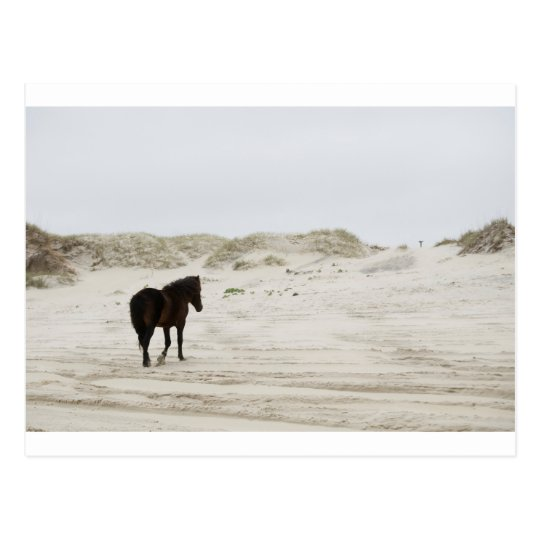 wild horse at Corolla Beach Postcard