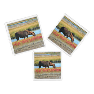 Wild Horse Eating In The Field Acrylic Tray