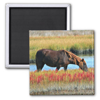 Wild Horse Eating In The Field Magnet