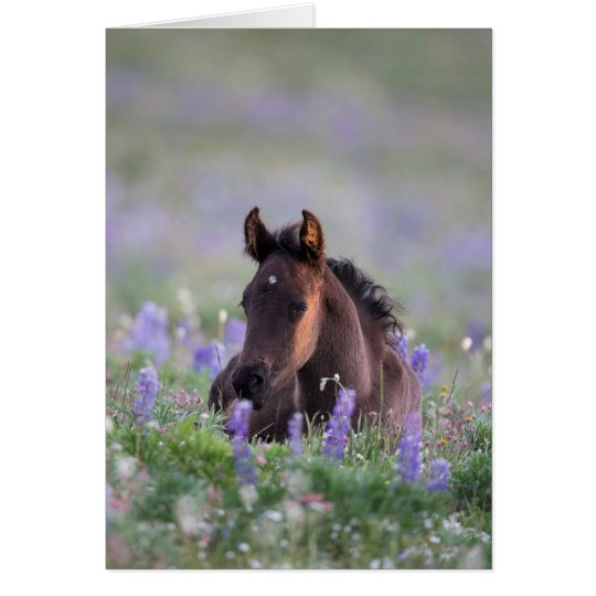 Wild Horse Greeting Card - Filly in the Lupine