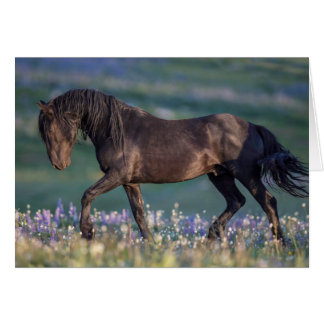 Wild Horse Greeting Card - Galaxy Trots