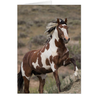 Wild Horse Greeting Card - Picasso Runs Up