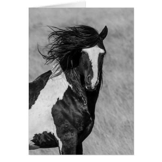Wild Horse Greeting Card - Washakie on Fire