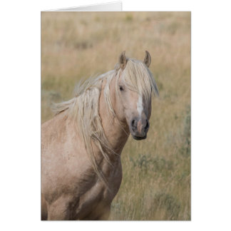 Wild Horse Greeting Card - Wild Palomino Stallion