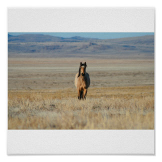 Wild horse in field poster