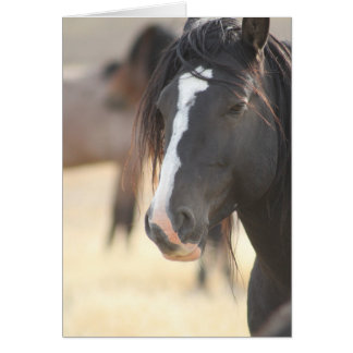 WILD HORSE NOTE CARD