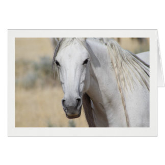 WILD HORSE OF THE ONAQUI MOUNTAINS, UTAH CARD