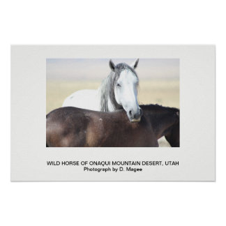WILD HORSE OF THE ONAQUI MOUNTAINS, UTAH POSTER