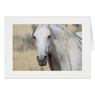 WILD HORSE OF UTAH PHOTOGRAPH CARD