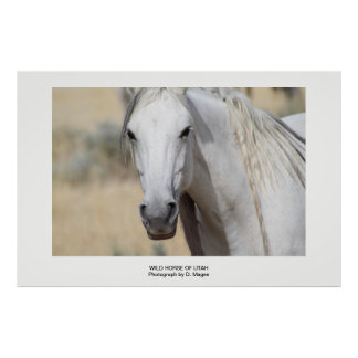 WILD HORSE OF UTAH PHOTOGRAPH POSTER