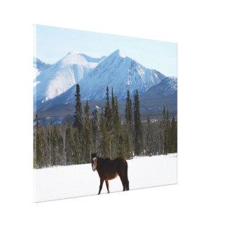 Wild Horse on Alaska Highway Canvas Print