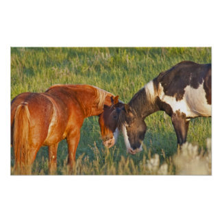 Wild Horses at Theodore Roosevelt National 2 Poster