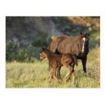 Wild Horses at Theodore Roosevelt National Park Postcard